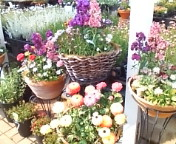 初めての花屋。